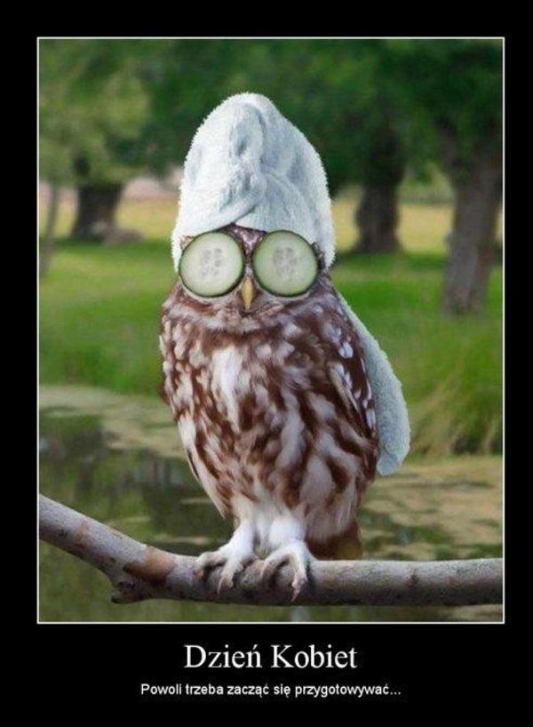 демотиватор сова спит последнее время много